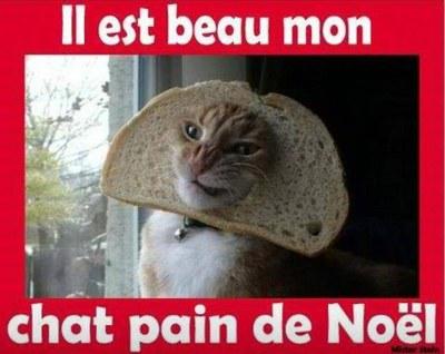 A131- Chat-pain de Noë