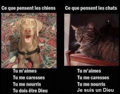 A178 chiens chats dieu