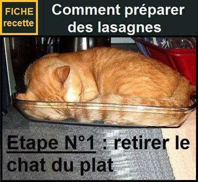 Lasagnes chat