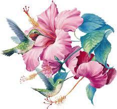 fleurs espérance